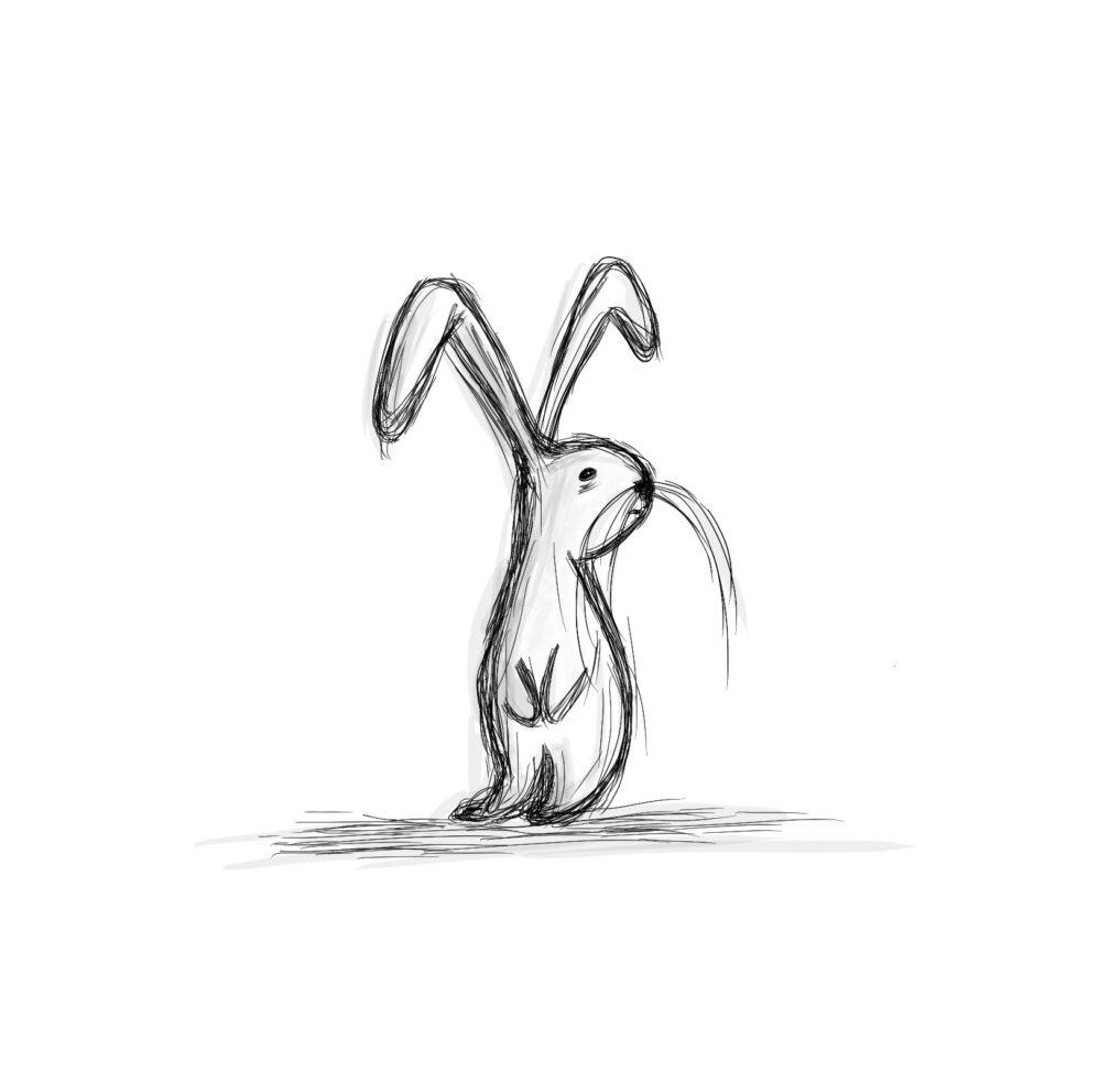 o króliku